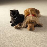 Pets On Carpet