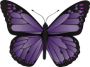 majestic_butterfly